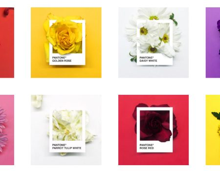 PANTONE Flowers - a Creative Palette of Colors Made with Flowers