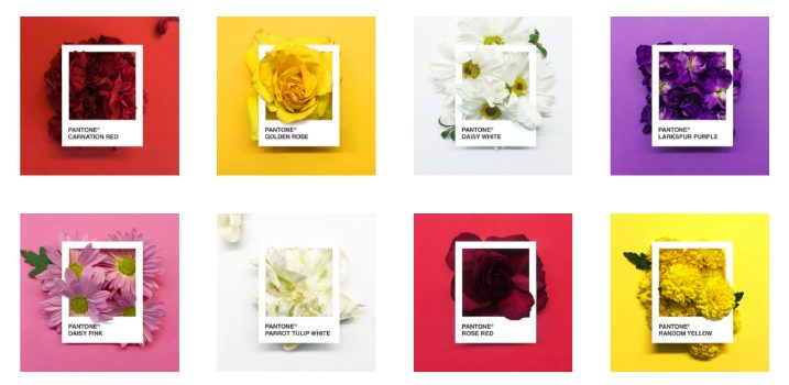 PANTONE Flowers - a Creative Palette of Colors Made with Flowers ➤ Discover the season's newest designs and inspirations. Visit Design Build Ideas at www.designbuildideas.eu #designbuildideas #homedecorideas #InteriorDesignProjects @designbuildidea